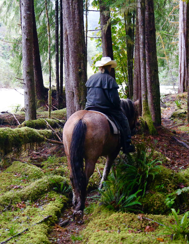 Horseback ride through a forest trail at the Clayoquot Wilderness Resort