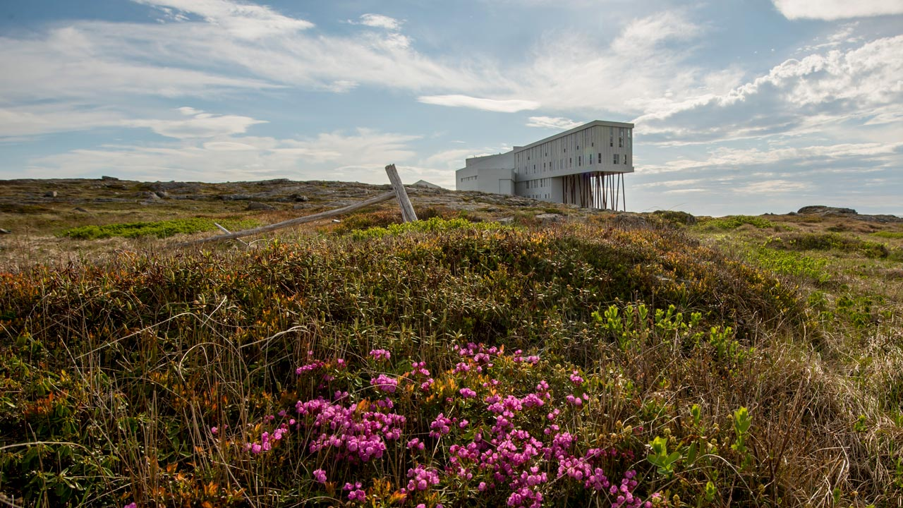 View of the Fogo Island Inn over a green hill with purple flowers