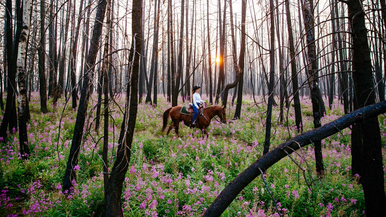 Woman horseback riding through a post wildfire forest at the Siwash Lake Wilderness Resort, BC