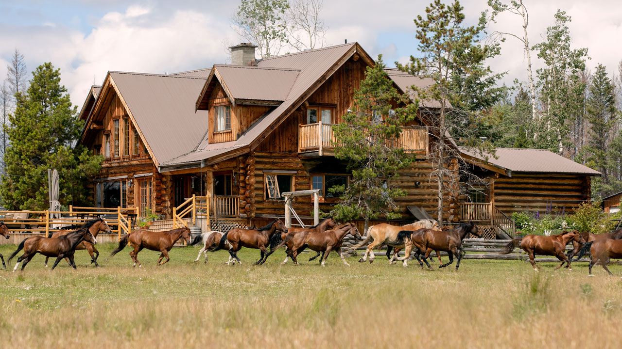 Horses running past the Ranch House at the Siwash Lake Wilderness Resort