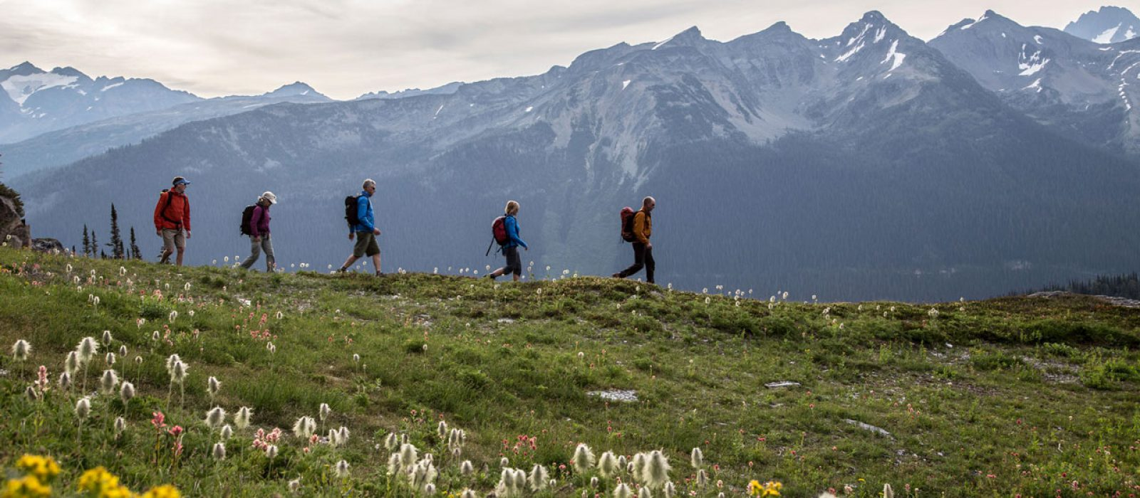 People hiking in the Purcell Mountains in an alpine meadow