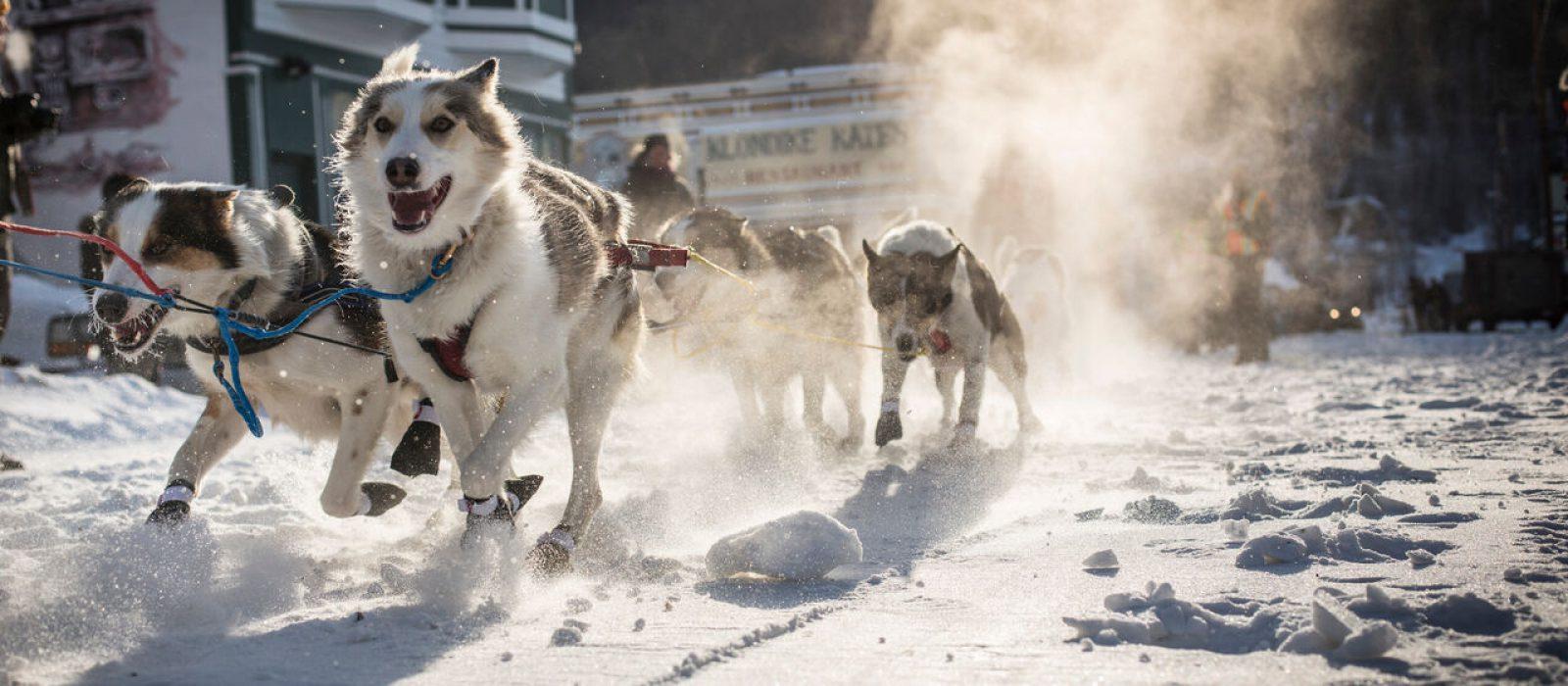 Dog Sledding in Dawson City, Yukon